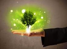 Árvore de incandescência que cresce na mão de um homem de negócios Fotografia de Stock Royalty Free