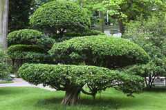 Árvore de jardinagem Foto de Stock Royalty Free
