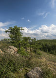 Árvore de larício nas montanhas de Ural Imagens de Stock Royalty Free