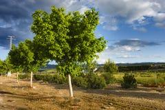 Árvore de limão colorida Fotografia de Stock