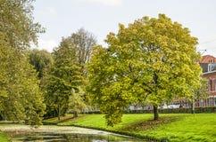 Árvore de Linden por um canal imagens de stock royalty free