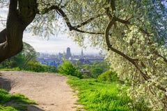 Árvore de maçã da flor no centro da cidade de Gdansk Fotos de Stock Royalty Free