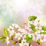Árvore de maçã de florescência contra o céu Eps 10 Imagem de Stock Royalty Free