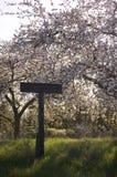 Árvore de maçã de florescência da mola bonita Imagens de Stock Royalty Free