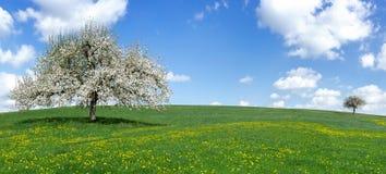 Árvore de maçã de florescência em um prado montanhoso imagens de stock royalty free