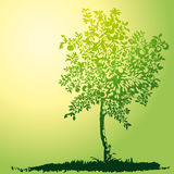 Árvore de maçã nova Imagem de Stock