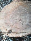 Árvore de madeira da fatia de madeira Fotos de Stock Royalty Free