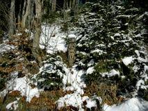 Árvore de madeira de sculpture Fotos de Stock