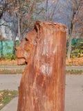Árvore de madeira de sculpture A cabeça do ` s do leão fotografia de stock royalty free