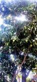 Árvore de manga com luz transversal foto de stock royalty free
