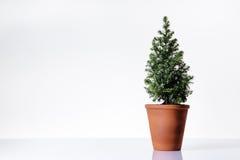 Árvore de Mini Christmas Fotos de Stock Royalty Free