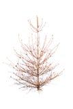 Árvore de Natal calva imagens de stock