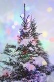 Árvore de Natal coberta pela neve fora Foto de Stock