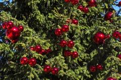 Árvore de Natal com esferas vermelhas Foto de Stock
