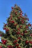 Árvore de Natal com esferas vermelhas Fotos de Stock