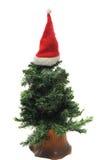 Árvore de Natal com o chapéu vermelho de Santa fotografia de stock