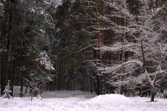 Árvore de Natal da natureza do inverno na neve Fotografia de Stock