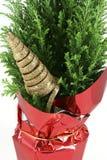 Árvore de Natal diminuta isolada no branco Imagens de Stock