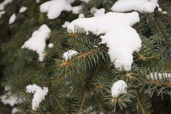 Árvore de Natal do inverno Fotos de Stock
