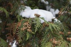 Árvore de Natal do inverno Imagens de Stock