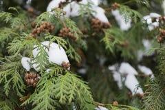 Árvore de Natal do inverno Imagens de Stock Royalty Free