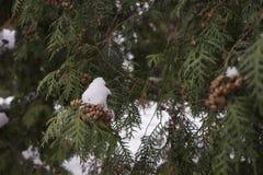 Árvore de Natal do inverno Foto de Stock
