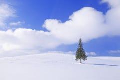 A árvore de Natal em Biei Fotografia de Stock Royalty Free