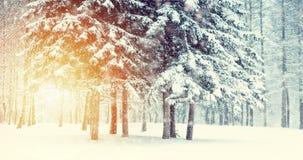 Árvore de Natal mágica da opinião da paisagem do conto de fadas fantástico vídeos de arquivo