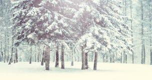 Árvore de Natal mágica da opinião da paisagem do conto de fadas fantástico filme