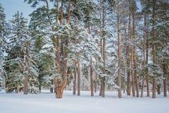 Árvore de Natal mágica da opinião da paisagem do conto de fadas fantástico imagens de stock