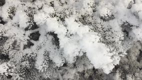 Árvore de Natal na neve vídeos de arquivo