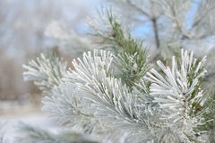 Árvore de Natal na neve Imagem de Stock Royalty Free