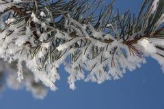 Árvore de Natal na neve contra imagem de stock