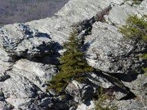 Árvore de Natal na rocha de suspensão Fotos de Stock