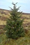 Árvore de Natal no pântano do relvado, Sally Gap, condado Wicklow 1 Imagens de Stock Royalty Free