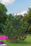 Árvore de Natal no verão Fotografia de Stock Royalty Free
