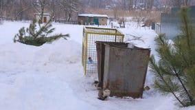 A árvore de Natal rejeitada após o ano novo no lixo, inverno, blizzard, gatos desabrigados video estoque