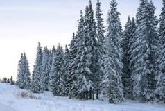 Árvore de Natal uma neve macia Fotos de Stock Royalty Free
