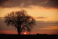 Árvore de olmo no por do sol fotografia de stock royalty free