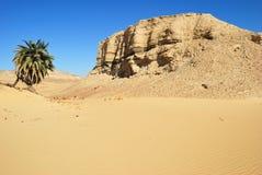 Árvore de palma no deserto Foto de Stock Royalty Free