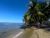 Árvore de palmas na praia de Puerto Viejo, Costa Rica foto de stock