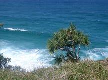 Árvore de Pandanas de encontro ao console de Stradbroke do oceano imagens de stock