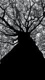 Árvore de para baixo fotografia de stock royalty free