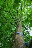 Árvore de para baixo abaixo fotografia de stock royalty free