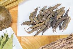 Árvore de parafuso do indiano do leste Imagem de Stock Royalty Free