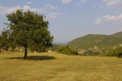 Árvore de pera selvagem sozinha Fotografia de Stock Royalty Free