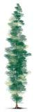 Árvore de pinho ilustração do vetor