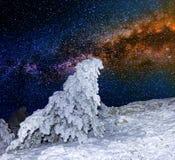 Árvore de pinho em um fundo estrelado do céu Fotografia de Stock