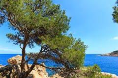 Árvore de pinho na costa de mar imagem de stock royalty free