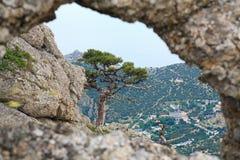 Árvore de pinho no monte da montanha do verão Fotografia de Stock